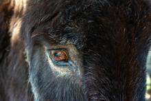 Beautiful Close Up Of Donkey's...