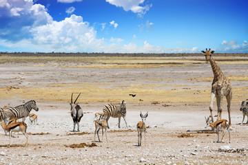 Landscape of Etosha Natioanl Park with gIraffe, Zebra, Impala and Gemsbok Oryx with a vibrant blue cloudy sky and open savannah background, Namibia, Southern Africa