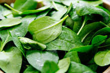 Fresh Spinach Leaves Or Spinach Salad Close Up, Background