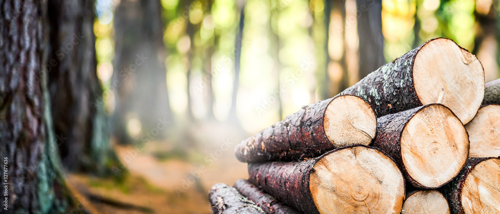 Fototapeta Log trunks pile, the logging timber forest wood industry. Wide banner or panorama wooden trunks