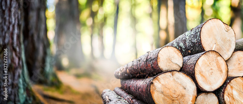 Obraz Log trunks pile, the logging timber forest wood industry. Wide banner or panorama wooden trunks - fototapety do salonu