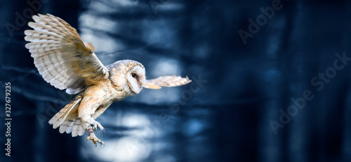 Naklejki Sowa   beautiful-flying-barn-owl-bird-in-dark-forest-wide-banner-or-panorama-photo