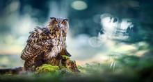 Eurasian Eagle-Owl Sitting Wit...