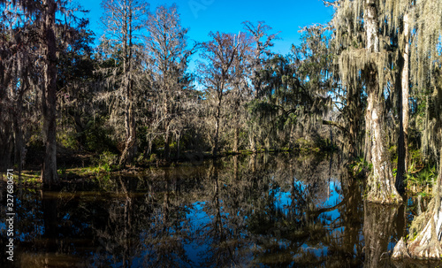 A panoramic view of a South Carolina Swamp land with loads of Spanish moss and o Wallpaper Mural