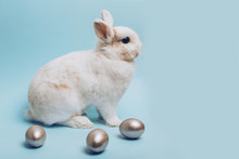 White Rabbit With Silver Easter Egg On A Blue Background.