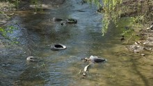 Tires Dumped Into A Creek. Con...