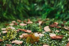 Forest Concept. Green Landscap...