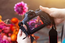 Camera On Hands Closeup. Making Nature Photo And Video With Flowers