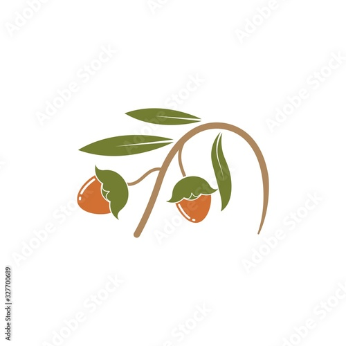 Tablou Canvas jojoba nuts vector illustration design