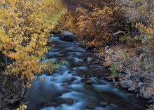 Babbling Blue Water Flowing Between Red And Orange Autumn Leaves