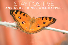 Inspirational Quote - Stay Positive, And Good Things Will Happen. With Beautiful Butterfly  On Rope. Motivational Words With Nature Life On Orange Vintage Wall Color Background.