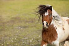 Sassy Mini Horse