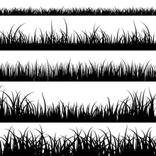 Grass Silhouettes. Panorama Bl...