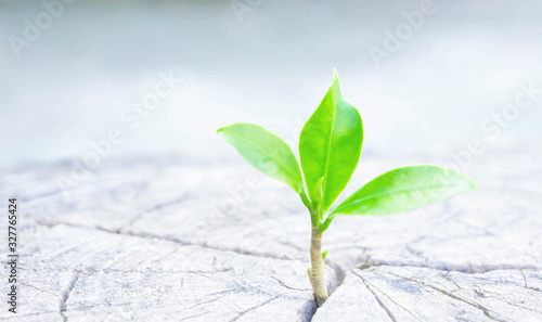 Fotografie, Obraz Strong seeding growing from dry and old  cut down tree as new business have to d