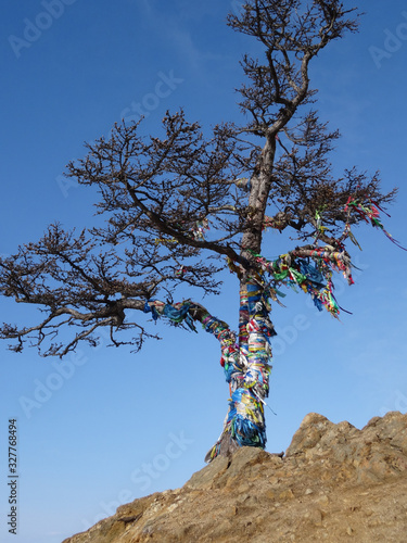 Vászonkép a tree on a cliff tied with ritual ribbons against a blue sky
