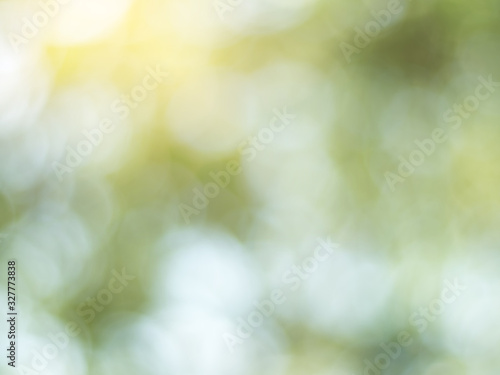 Fotomural Natural outdoors bokeh background in green and yellow tones, Blurred green tree