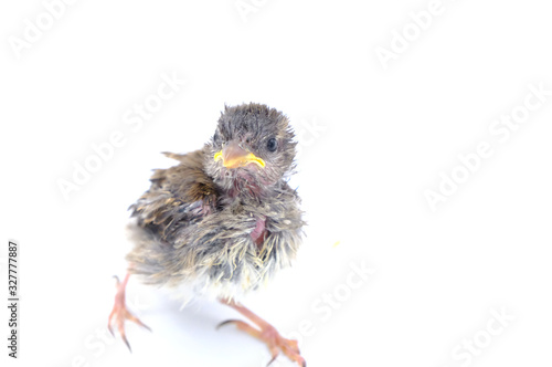 Close up view of nice little bird on white background Canvas Print