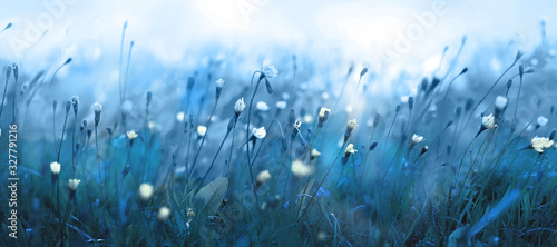 Mysterious soft blue misty morning in the meadow Fototapete