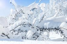 Winter Landscape With Snow Cov...