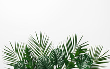 Tropical Palm And Monstera Lea...