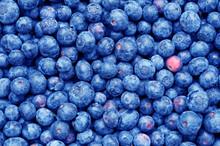 Arándano Azul Fruta Blanco Mo...