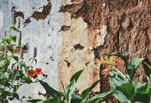 中国雲南の花のある古...