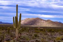 Classic Arizona Desert Landsca...