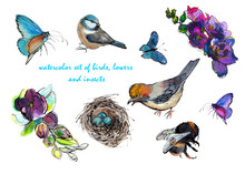 Set Of Hand-drawn Watercolor Elements: Birds Tit And Jay With A Nest, Butterflies, Bumblebee And Flowers. Used Ink Graphics