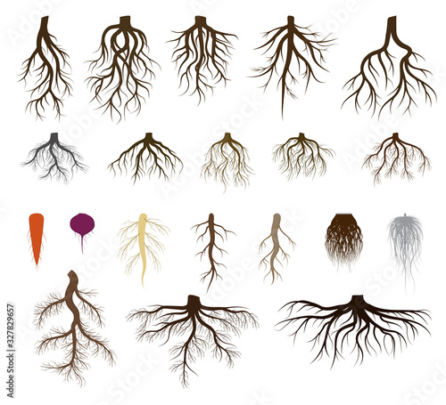 Canvas Root system set vector illustrations
