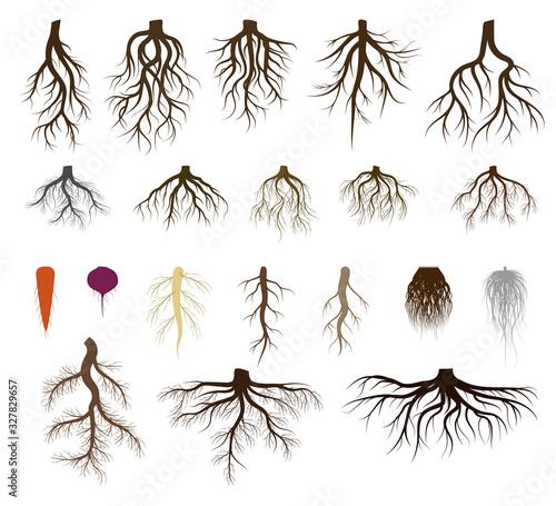 Root system set vector illustrations Fotobehang