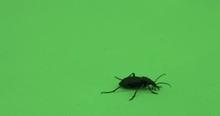 Beetle Crawling On Green Scree...