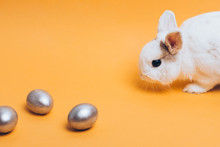 White Rabbit With Silver Easter Egg On A Yellow Background.