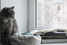 Grey Cat Sitting On The Window...