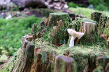 Mushrooms Growing In Moss Forest