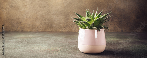 Fotografiet Indoor houseplant succulent in pink ceramic pot on brown background with copy space