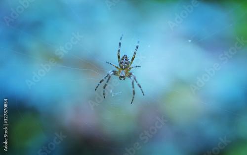 Araignée macro toile animal Wallpaper Mural