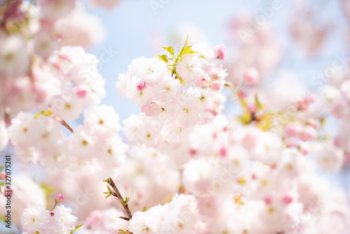 Fotografia boccioli di fiori in primavera