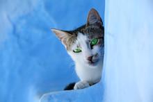 Gato Sobre Fondo Azul Ojos Ver...