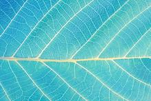 Macro Leaf Texture. Abstract N...