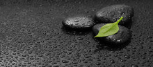 Green Leaf And Black Stones With Drops. Nature Background.