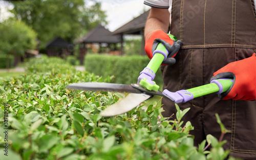 Carta da parati Scissors in hands of man cutting bushes.