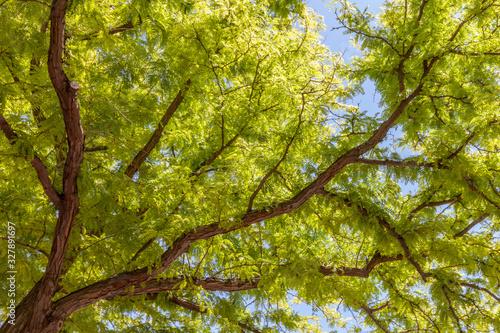 Beautiful tree filling page #327891697