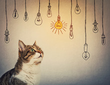 Curious And Pensive, Striped Cat Looking Up Attentive Thinking Of Entertaining Ideas As Choosing A Hanging Glowing Light Bulb From Others Are Switched Off.
