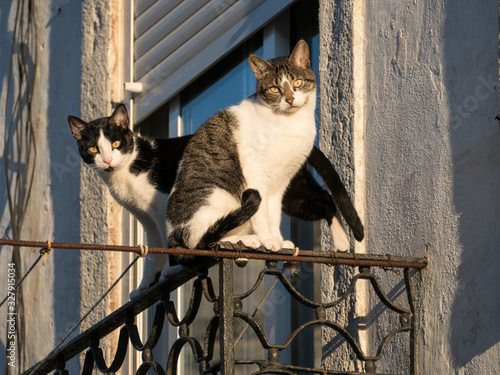 two cats on a balcony railing Canvas Print