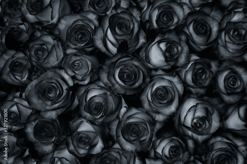 Fototapeta Many black roses are a top view. Vintage style background. obraz