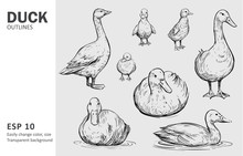 Outline Ducks With Ducklings. Hand Drawn Sketch Converted To Vector.