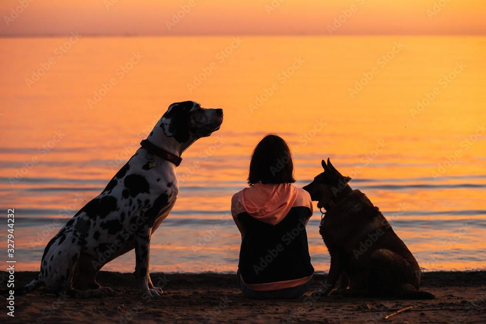 Obraz Unrecognizable woman with dogs watching sunset on beach fototapeta, plakat