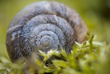 Snail Shell On Green Forest Mo...