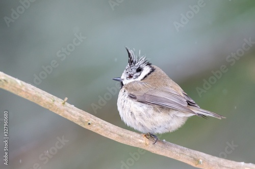 Closeup shot of a bewicks wren bird perched on a tree with a blurred background Canvas Print
