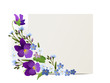 Ornament von Veilchen und Vergissmeinnicht Blumen mit Karte,   Vektor Illustration isoliert auf weißem Hintergrund